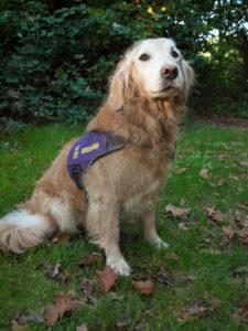De buddy hond van De Stal