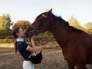 De Stal paard